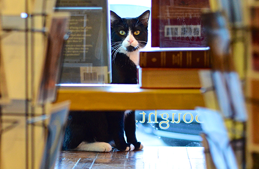 Cat Tales Dusty Bookshelf Adopts New Feline Friend