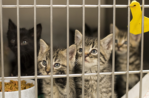 kittens need your help