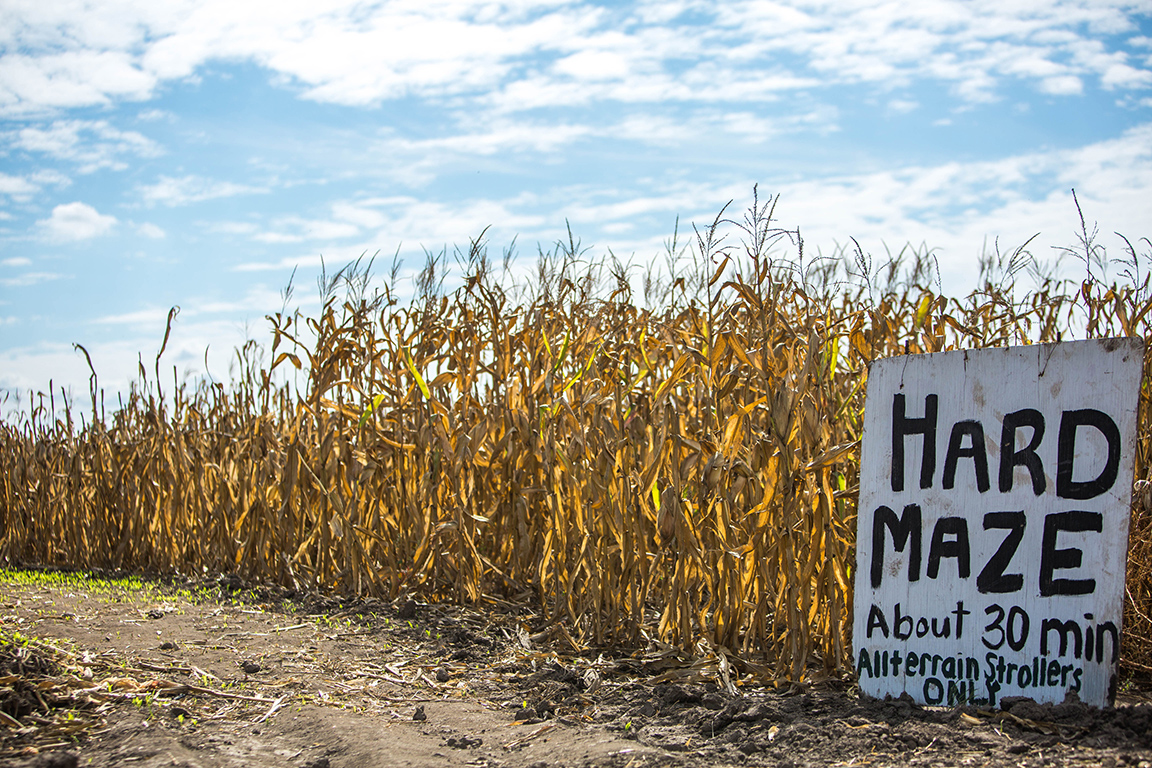 Pumpkin patches: more than meets the eye   the collegian.