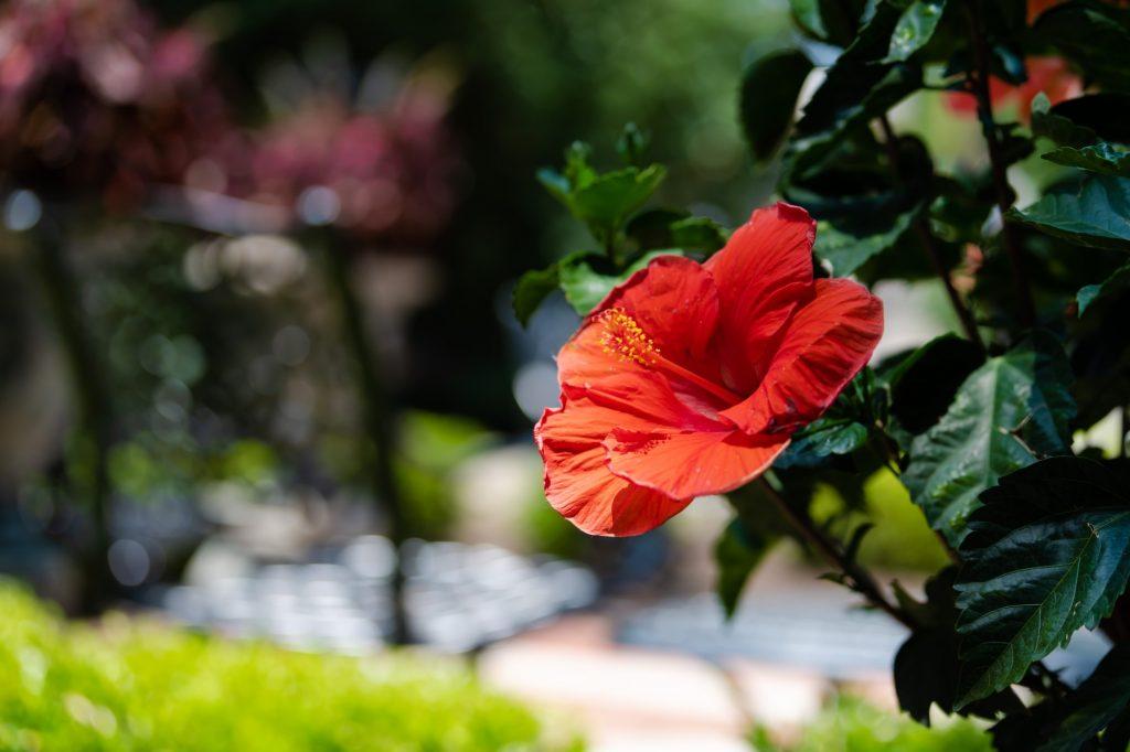 06.10.18.GardenTour.OB-4.jpg