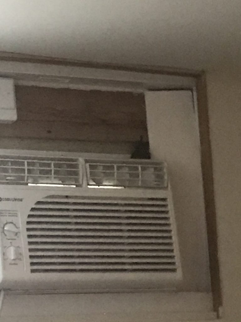 A bat enters Wilson's apartment through a crack next to her window air conditioner. (Photo courtesy of Audrey Wilson)