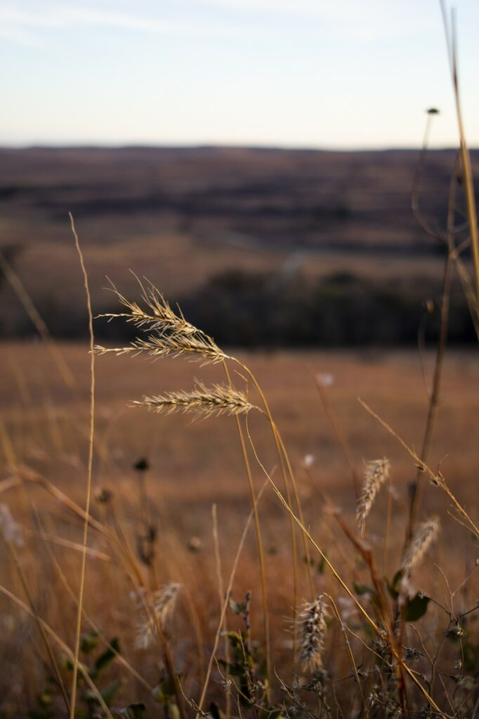 The Konza Prairie Biological Station is a nature preserve in Riley County. (Bailey Britton | Collegian Media Group)